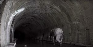 tunelEngana